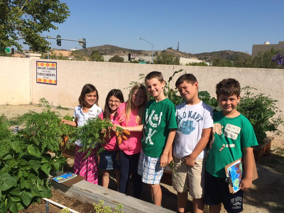 Students Harvesting in the Tijeras Creek Garden